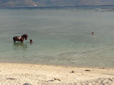 Cavalo também toma banho de mar!